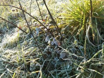 pineta-sacchetti-30-gennaio-2017-3